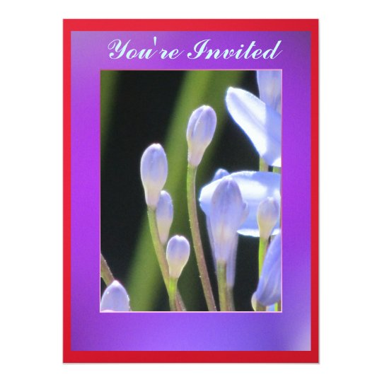 Blue lily Of The Nile Flower Card