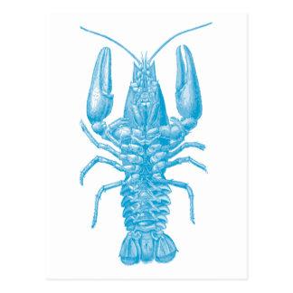 Blue Lobster Postcard