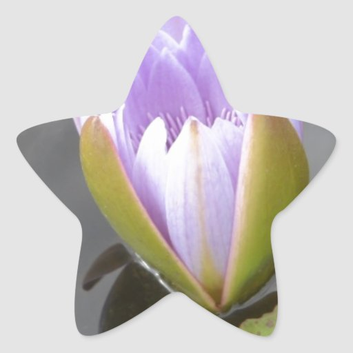 Blue Lotus Star Sticker