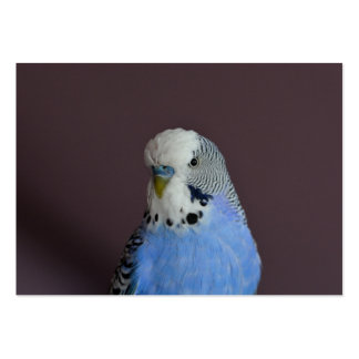 Blue Lovely Budgie Large Business Card