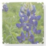 Blue Lupine Stone Coaster