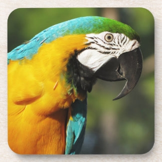Blue Macaw Beverage Coaster
