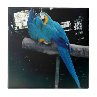 Blue Macaw Ceramic Tile