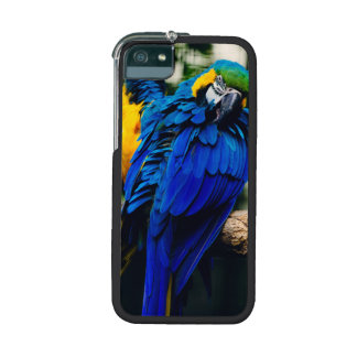 Blue Macaw Parrot, Exotic Tropical Bird iPhone 5/5S Cases