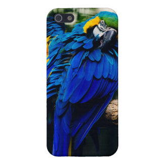 Blue Macaw Parrot, Exotic Tropical Bird iPhone 5/5S Cover