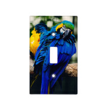 Blue Macaw Parrot, Exotic Tropical Bird Light Switch Cover