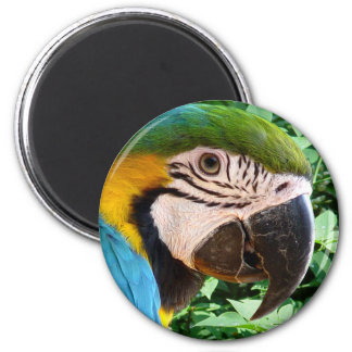 Blue Macaw Parrot Magnet