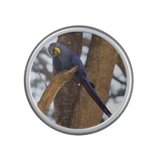 Blue Macaw Parrot Pet Bird Branch Animal Tree Leaf Bluetooth Speaker