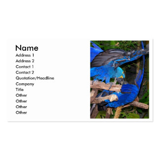 Blue macaw parrots fighting photograph picture Double-Sided standard business cards (Pack of 100)
