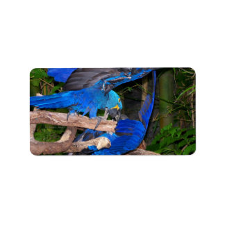 Blue macaw parrots fighting photograph picture address label