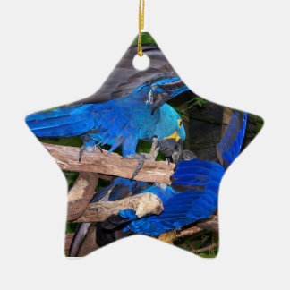 Blue macaw parrots fighting photograph picture christmas ornaments