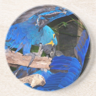 Blue macaw parrots fighting photograph picture sandstone coaster