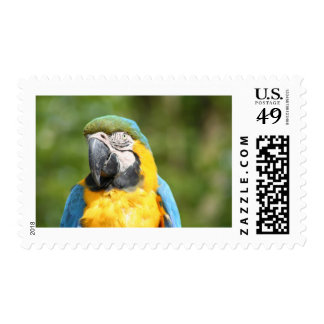 Blue Macaw Postage