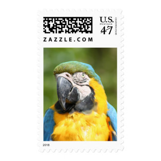 Blue Macaw Postage Stamp
