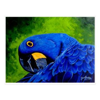 Blue Macaw Postcard