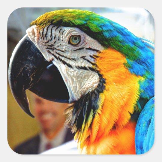Blue Macaw Square Sticker