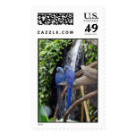 Blue macaws Stamp