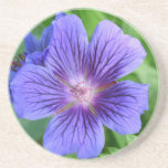 Blue macro Flower Beverage Coaster