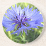 Blue macro Flower Beverage Coasters