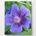 Blue Macro Flower Placa Para Mostrar