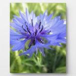 Blue Macro Flower Placas De Madera