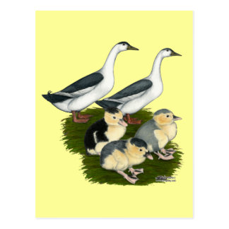 Blue Magpie Duck Family Post Card