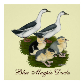 Blue Magpie Duck Family Poster