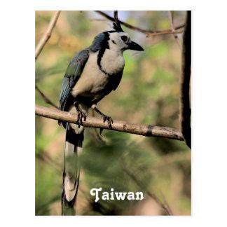 Blue Magpie Postcard