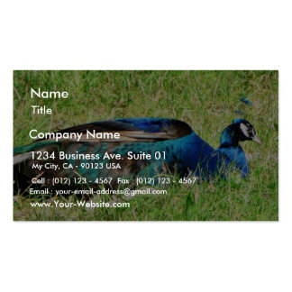 Blue Male Peacock Business Card Template