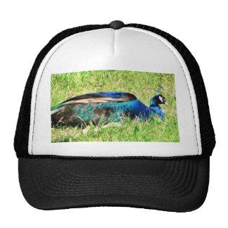 Blue Male Peacock Hats