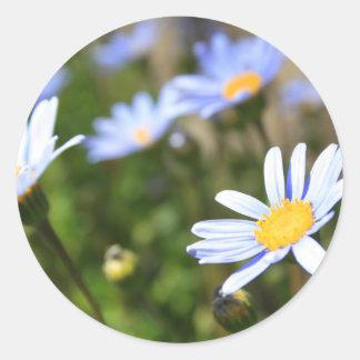 Blue Marguerite Flowers Sticker