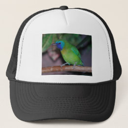 blue masked leaf bird trucker hat