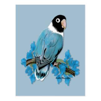 Blue Masked Lovebird Postcard
