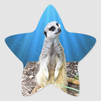 Blue Meerkat Night,_ Star Sticker