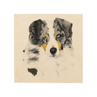 "Blue Merle Aussie Dog 8""x8"" Wood Photo Print"