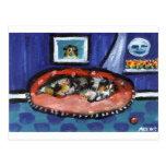 Blue Merle Australian Shepherd in bed Post Card