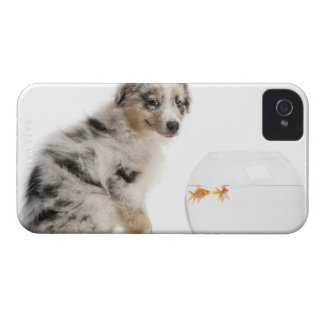 Blue Merle Australian Shepherd puppy Case-Mate iPhone 4 Case