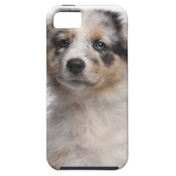 Case-Mate Vibe iPhone 5 Case with Australian Shepherd Phone Cases design