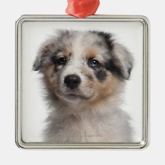 Blue Merle Australian Shepherd puppy close-up Square Metal Christmas Ornament