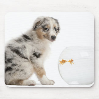 Blue Merle Australian Shepherd puppy looking at Mouse Pad