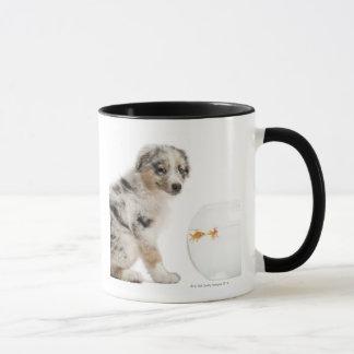 Blue Merle Australian Shepherd puppy looking at Mug