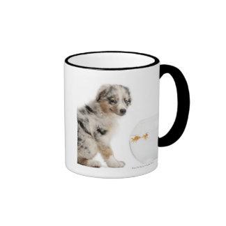 Blue Merle Australian Shepherd puppy looking at Ringer Mug