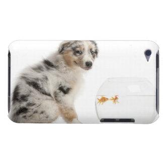 Blue Merle Australian Shepherd puppy looking Case-Mate iPod Touch Case