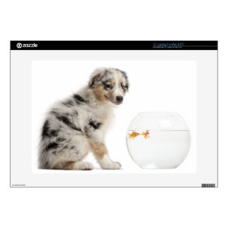 "Blue Merle Australian Shepherd puppy looking Skin For 15"" Laptop"