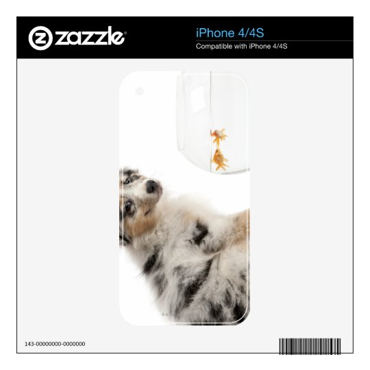 Blue Merle Australian Shepherd puppy looking Skins For iPhone 4S