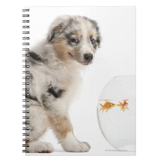 Blue Merle Australian Shepherd puppy Notebook