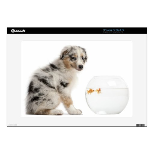 "Blue Merle Australian Shepherd puppy Skin For 15"" Laptop"