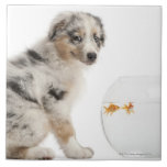 Blue Merle Australian Shepherd puppy Large Square Tile