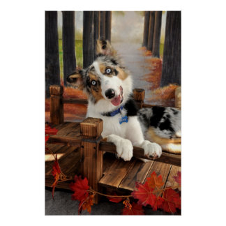 Blue Merle Border Collie Puppy Poster~Fall Poster