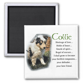 Blue Merle Collie Gifts Magnet